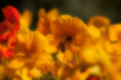 Blurred seasonal flowers with defocussed background Stock Photography