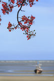 Blurred seaview with peacock flowers. In the foreground Royalty Free Stock Photo