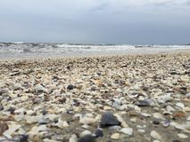 Blurred shells on The beach Royalty Free Stock Photo