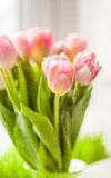 Blurred shot of beautiful pink tulip on windowsill Royalty Free Stock Images