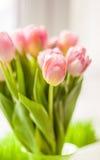 Blurred shot of beautiful pink tulip on windowsill Royalty Free Stock Images