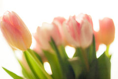 Blurred shot of pretty pink and red tulips Stock Photography
