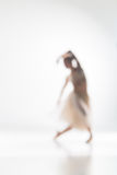 Blurred silhouette of ballerina on white background Stock Photos