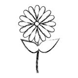 blurred silhouette sunflower floral icon design Royalty Free Stock Images