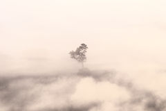 Blurred of silhouette tree in the mist. Used color tool for orange color light Royalty Free Stock Images