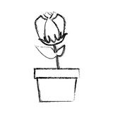 Blurred silhouette tulip flower in pot. Illustration Royalty Free Stock Images