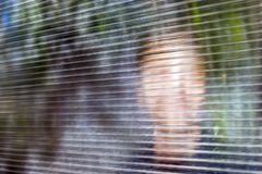 Blurred Smiling Young Face behind Dusty Fluted, Ribbed Glass or Clear Polycarbonate Corrugated Sheet. Online Anonymous, Anon. Communication, False Identity stock photography