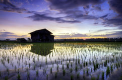 Blurred and soft focus silhouette image of beautiful morning with lonely abandon house and reflection on the water, surrounded by Royalty Free Stock Images
