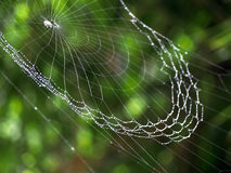 Blurred Spiderweb Background with Dew Droplets. A spider web with dew droplets looks like a glittering necklace in the sunlight Royalty Free Stock Photos
