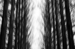 Blurred spooky pine woods Royalty Free Stock Photos
