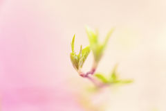Blurred spring background with fresh green leaves on tree branch Stock Images