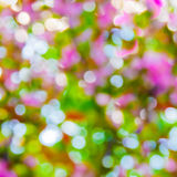 Blurred spring background. Royalty Free Stock Photos