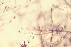 Blurred spring background with tree branches Stock Photos