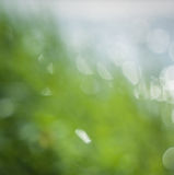 Blurred spring color grass Stock Photo