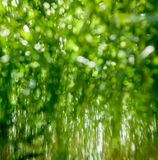 Blurred spring color grass Stock Image