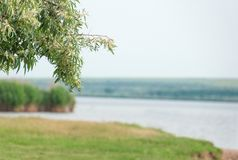 Blurred spring - summer landscape with lake. Blossoming branch stock photo