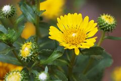 Blurred summer background with growing flowers calendula, marigold. Sunny day. Beautiful Floral Wallpaper royalty free stock photo