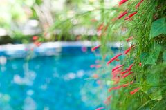 Blurred summer background of a tropical garden with a pool in a vignette of flowers. Stock Images