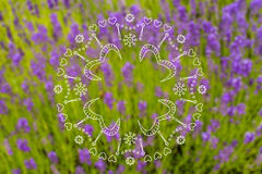 Blurred summer lavender background Royalty Free Stock Images