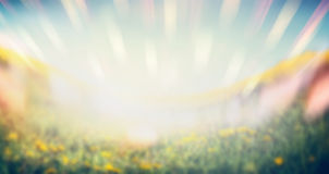 Blurred summer nature background with flowers, grass and sun rays Stock Photography