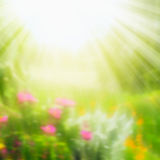 Blurred summer nature background with sun rays on sunny day Stock Image