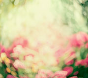 Blurred summer nature background Royalty Free Stock Photos
