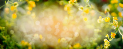 Blurred summer nature background with yellow garden or park flowers, banner Royalty Free Stock Images