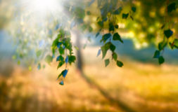 Blurred summer sun fall horizontal background stock image