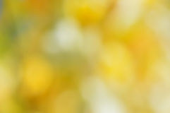 Blurred sunny abstract background.  Royalty Free Stock Photography