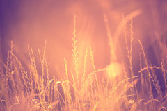 Blurred sunny abstract meadow detail background Royalty Free Stock Images