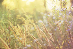 Blurred sunny meadow Stock Photos