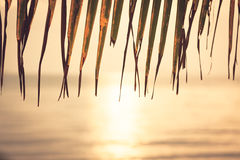 Blurred sunset beach with hanging palm leaf and horizon over sea Royalty Free Stock Photos