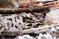 Blurred - Termites damaged to the books. Blurred, out of focus - Termites damaged to the books Royalty Free Stock Images