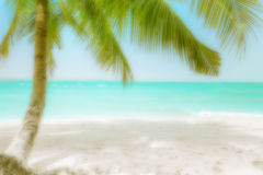 Blurred travel background with palm at tropical beach. Abstract blurred background for travel concept. Sunny day at amazing tropical beach with palm tree, white Royalty Free Stock Images