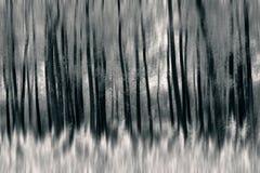 Blurred tree Stock Photos