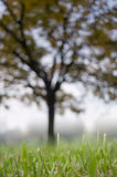 Blurred tree at background Royalty Free Stock Photo