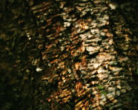 Blurred tree bark Stock Images