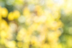 Blurred tree bokeh Royalty Free Stock Photography