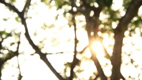 Blurred tree with sunlight, abstract  background. Blurred tree with sunlight, abstract background stock video