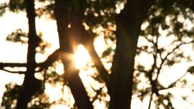 Blurred tree with sunlight, abstract  background. Blurred tree with sunlight, abstract background stock video footage