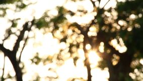 Blurred tree with sunlight, abstract  background. Blurred tree with sunlight, abstract background stock footage