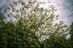 Blurred tree in sunlight May Royalty Free Stock Photography