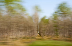 Blurred trees Stock Image