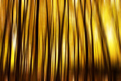 Blurred trees Royalty Free Stock Photography