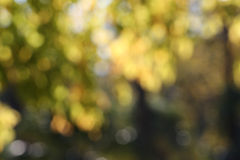 Blurred trees, background, autumn. A detailed view of the branches and leaves of some trees in autumn, in a bright sunny day, blurred, landscape cut Stock Image