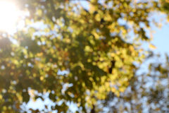 Blurred trees, background, with sunbeam Royalty Free Stock Photos
