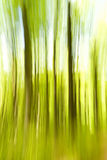 Blurred Trees Stock Images