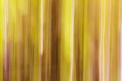 Abstract Blurred Trees Background Stock Images
