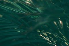 Blurred tropical green leaf background, Dark tone theme.  stock photography