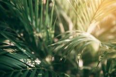 Blurred Tropical green leaf in dark tone.  stock photo